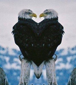 Eagles-in-Love