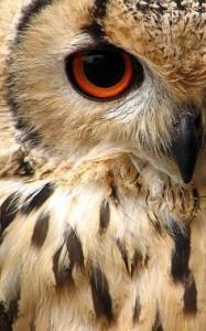 Half owl face