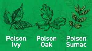 Poison-Ivy-Oak-Sumac-CU-Main-img-1600x900