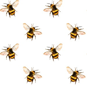Honey bees resized